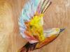 abby_birdcollage